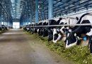 Sở Kế hoạch và Đầu tư tổ chức họp thẩm định đối với Dự án Trang trại Bò sữa Vinamilk Quảng Ngãi