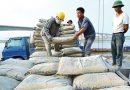 Cement consumption continues to rise