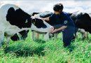 Lần đầu tiên Việt Nam có hệ thống trang trại đạt chuẩn Global G.A.P lớn nhất châu Á