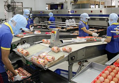 Japanese egg producer Ise Foods enters Vietnam market, eyes mega farm