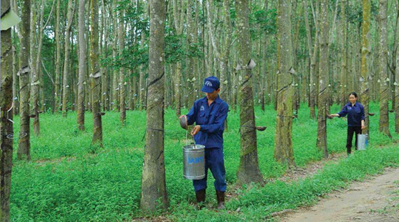 Rubber Group builds three processing plants