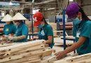 Ngành gỗ Việt Nam bắt tay vào việc thực hiện chuyển đổi số