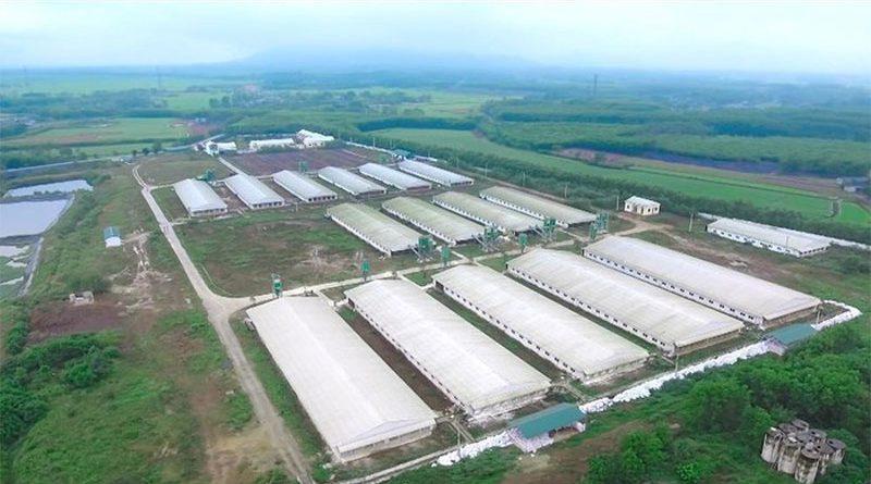 Gia Lai sắp có dự án chăn nuôi công nghệ cao hơn 1.000 tỷ