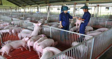 Những tín hiệu tích cực từ ngành chăn nuôi
